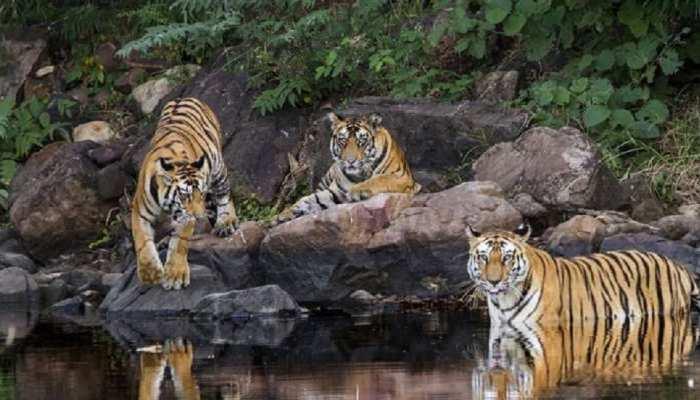 अलवर: सरिस्का में शुरू हुआ पर्यटकों के आने का क्रम, अब वन विभाग इस कवायद में जुटा...