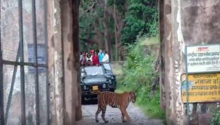 Ranthambore National Park में दिखा जबरदस्त नज़ारा, वीडियो से Social Media पर मची धूम