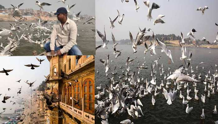 varanasi siberian birds came in varanasi for winters see beautiful images uppp
