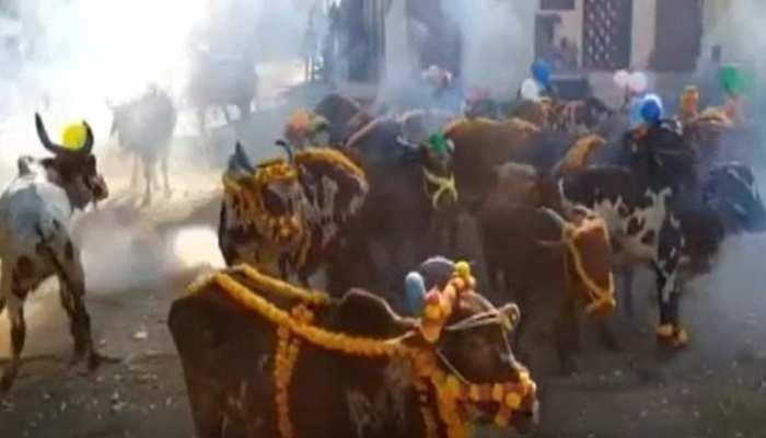 पशुओं को सजा कर उनके आसपास फोड़ते हैं पटाखे, क्योंकि यहां है अनूठी परंपरा