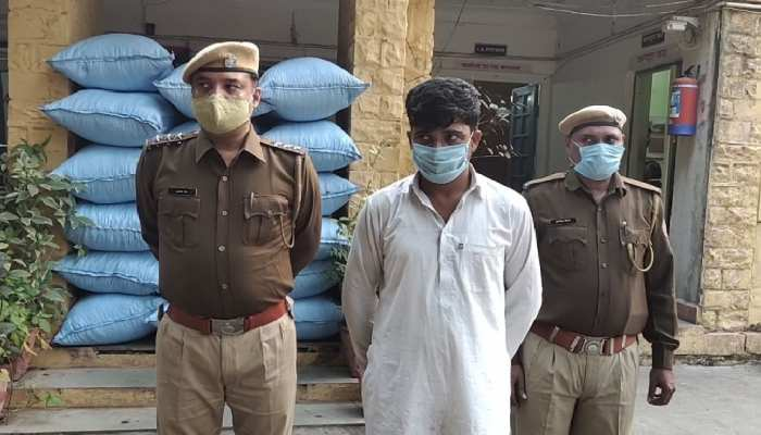 6 क्विंटल डोडा चूरा के साथ एक तस्कर गिरफ्तार, गेहूं की बोरियों के नीचे दबा मिला