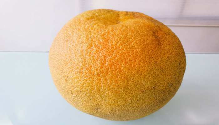 largest orange in the country its height is 8 inches and the weight is about 1.4 kg. See photos mpsn