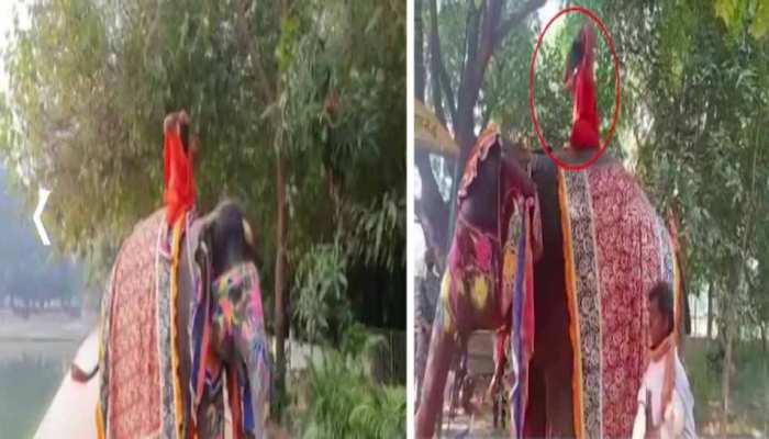 योगगुरु का 'हस्ति योग': भ्रामरी में 'फेल' तो अनुलोम-विलोम में 'पास' हुए रामदेव