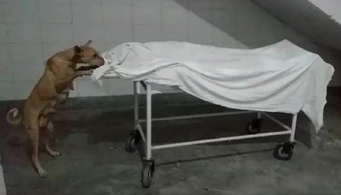 नींद में अस्पताल, शव नोंच रहे आवारा कुत्ते
