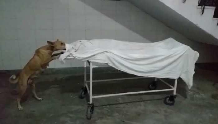 खबर का असर:  स्ट्रेचर पर रखे शव को नोंच रहा था आवारा कुत्ता, दो पर कार्रवाई, बनी जांच कमेटी