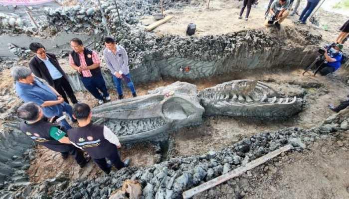 पांच हजार साल पुरानी Whale का कंकाल मिला, देखकर वैज्ञानिक भी रह गए हैरान