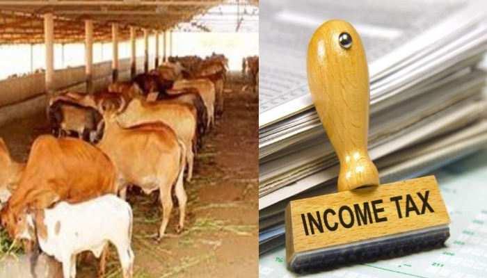 Madhya Pradesh सरकार का प्लान, गोशाला को दान दीजिए, Income Tax से राहत पाइए