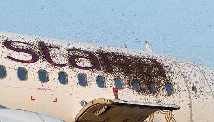 Kolkata Airport पर मधुमक्खियों के झुंड ने किया विमानों पर हमला, जानें फिर क्या हुआ