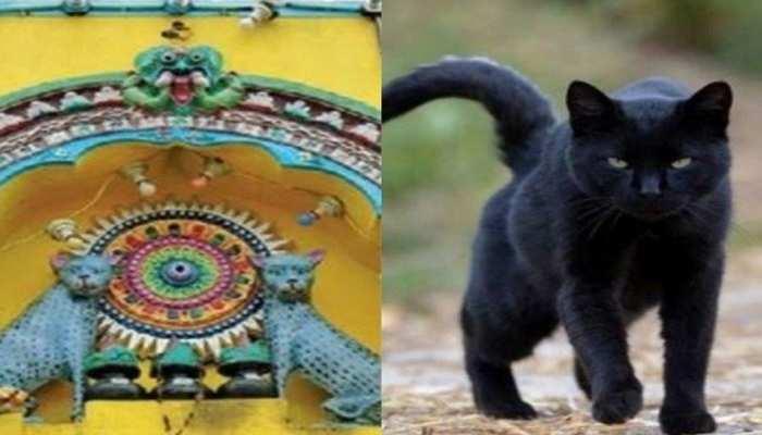 Weird Temple: इस अनोखे मंदिर में होती है बिल्ली की पूजा, जानिए 1000 साल पुरानी रोचक परंपरा
