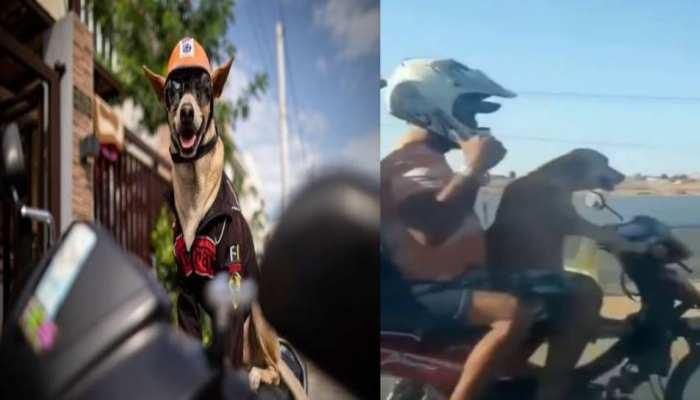 Viral Video: अपने मालिक को Bike Ride पर ले जाता है यह कुत्ता, Swag देखकर आप भी हो जाएंगे दीवाने