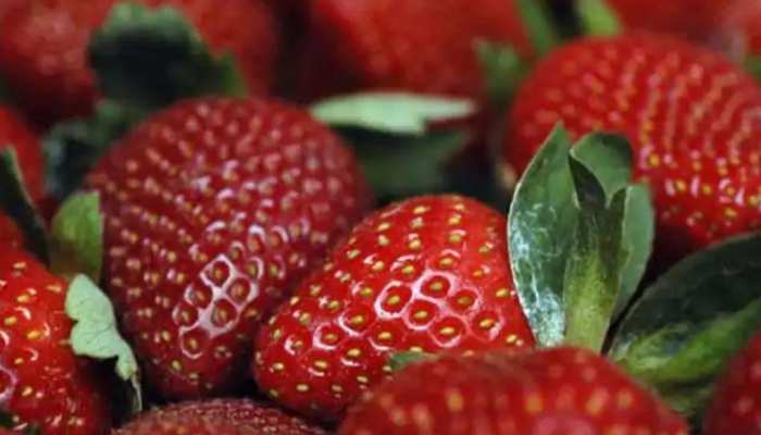 Internet से युवा किसान ने सीखी खेती, और उगा दी राजस्थान की धरती पर  Strawberry