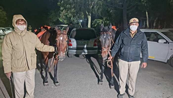 Farmers Protest: सिंघु बॉर्डर पर पुलिस संग ड्यूटी करती हैं दो घोड़ियां, जानिए इनकी खासियत