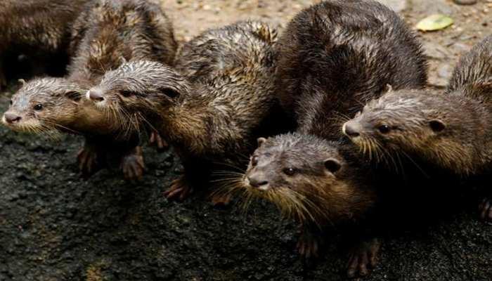 Why 15 Million Beaver will be burnt in Denmark
