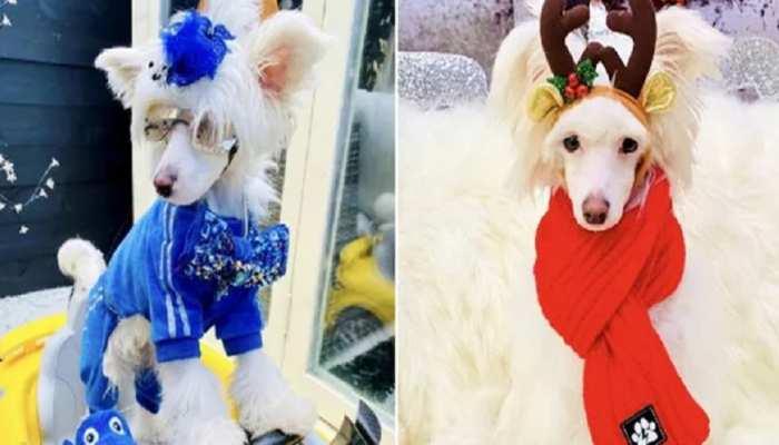 dog owner alisa thorne spends 12 lakh rupees on her pooch