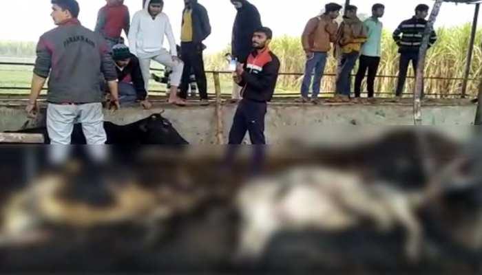 गौशाला में शॉर्ट सर्किट से लगी भीषण आग, 14 गोवंश जिंदा जले