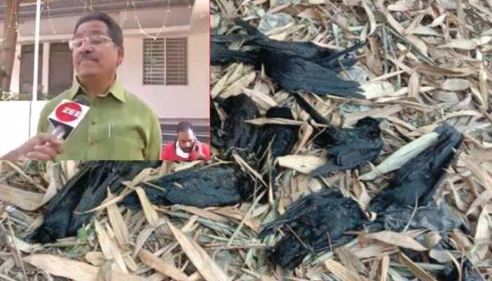 बर्ड फ्लू पर पशुपालन मंत्री प्रेम सिंह पटेल का बयान, जरूरत पड़ी तो मांस दुकानों को बंद किया जाएगा