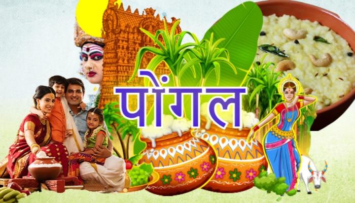 क्यों मनाते हैं पोंगल, जानिए महादेव शिव और नंदी से जुड़ी ये लोककथा