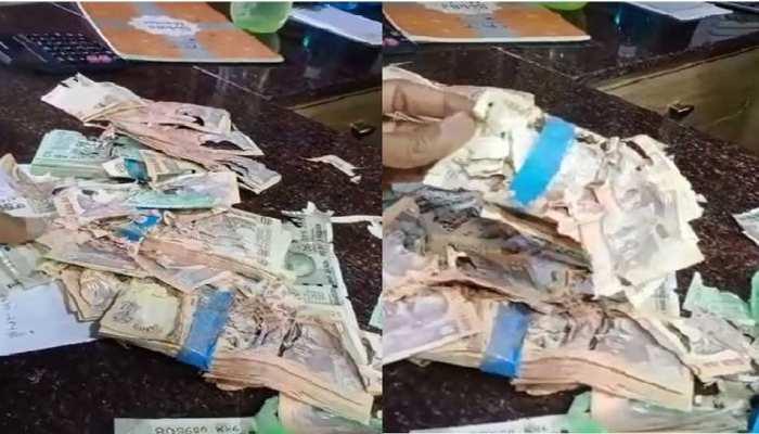 बैंक लॉकर में रखा कैश खा गए दीमक, ग्राहक ने मांगा पैसा तो बैंक बोला- 'हमारी जिम्मेदारी नहीं'