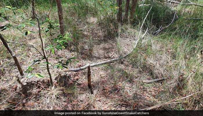 Viral Photo: इस तस्वीर में छिपा है Poisonous Snake, क्या आप ढूंढ सकते हैं? ज्यादातर लोगों ने मानी हार