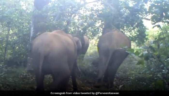 जब जंगल में हाथी ने किया डांस, ऐसे थिरकाने लगा पैर, सोशल मीडिया पर वायरल हुआ Video