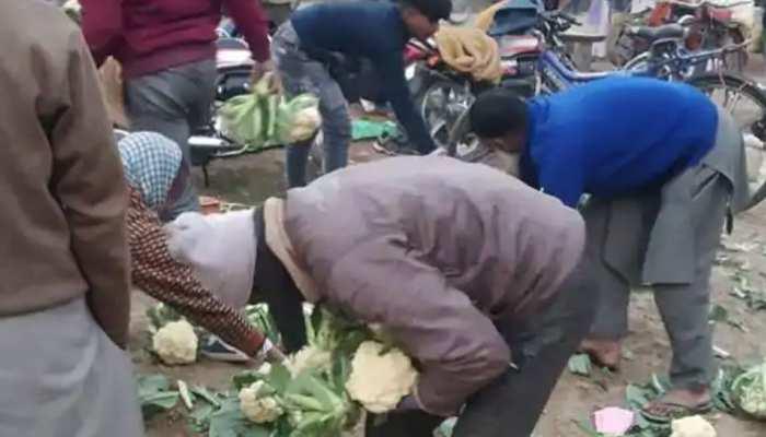 भाव नहीं मिले तो सड़क पर गोभी फेंक गया किसान, लोगों में मची लूटने की होड़