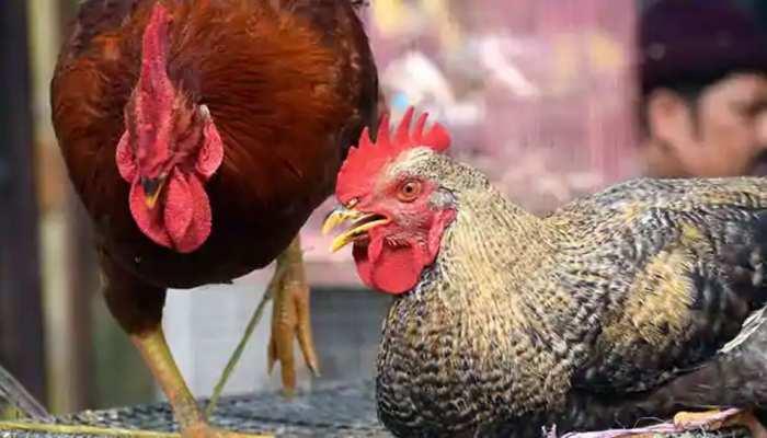 Roosters Put Behind Bars: Telangana में Police ने 2 मुर्गों को हवालात में बंद किया