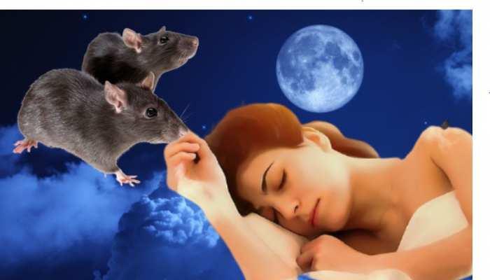 सपने में अगर घर में चूहे घूमते दिखें तो जानिए क्या है इसका मतलब?