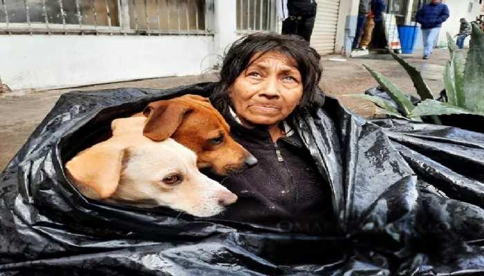 बेजुबान जानवर संग कचरे की पॉलीथीन को बनाया 'घर', आपको हिला देंगी तस्वीरें