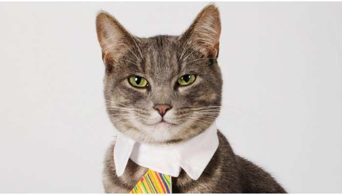 Viral Video: वकील की जगह एक बिल्ली ने लड़ा Court Case, वजह जानकर विश्वास नहीं करेंगे आप