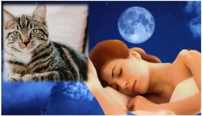 अगर सपने में दिखाई दे रही है बिल्ली तो हो जाएं सावधान