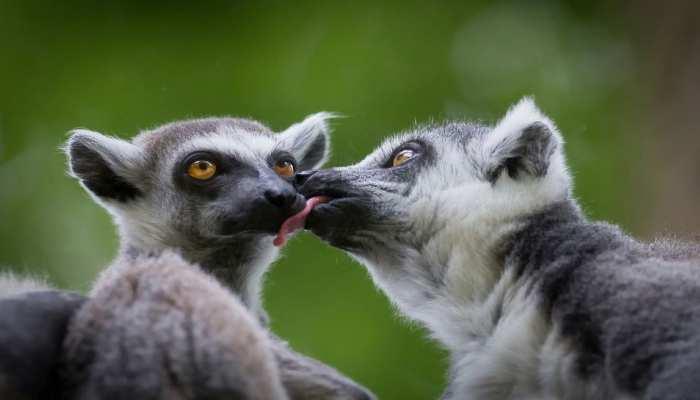 Life Science: इंसान ही नहीं दूसरे जीव में भी होते हैं 'Long love bond, एक साथी के साथ गुजार देते हैं जीवन