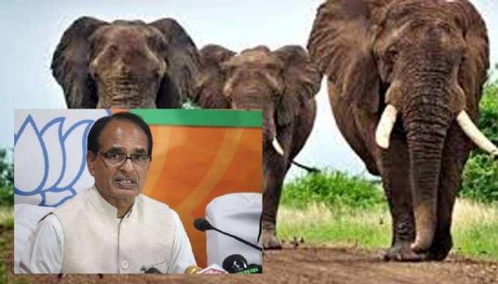 हाथियों के हमले से हुई थीं 3 मौतें, पीड़ित परिवारों को दी गई 4-4 की आर्थिक मदद, CM शिवराज ने किया ये वादा