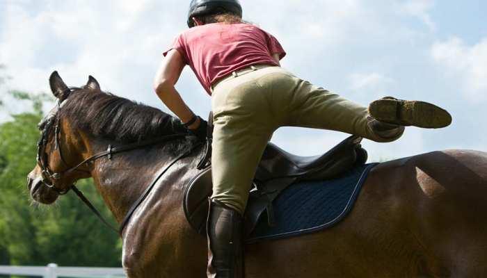 वकील का SSP को पत्र- 'पेट्रोल महंगा है, घोड़ा खरीदना चाहता हूं, प्लीज घुड़सवारी सिखा दीजिए'