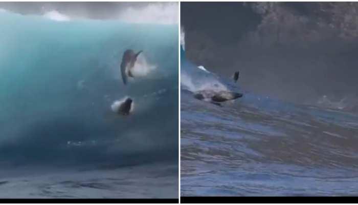 Viral Video में देखिए Dolphin Fish के अनोखे करतब, हैरान हुए बिना नहीं रह पाएंगे