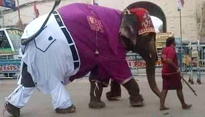 पैंट-शर्ट पहने सड़क पर जा रहा था हाथी, आनंद महिंद्रा इस कैप्शन के साथ किया ट्वीट