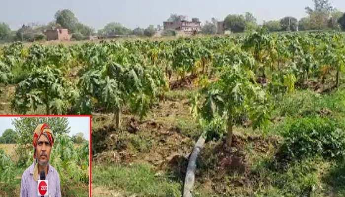मौसम की मार के चलते छोड़ी परंपरागत खेती, अब इस फसल से कमा रहे लाखों का मुनाफा