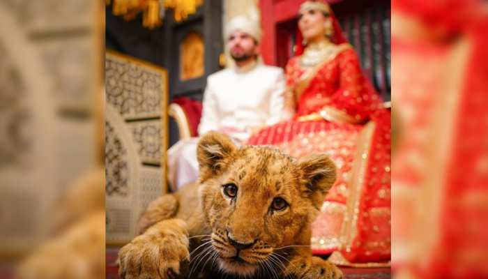 PICS Pakistani couple did photoshoot by giving drugs to lion child, now trapped in trouble