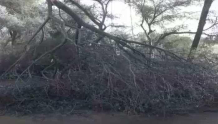 Rajasthan Weather Update : आंधी तूफान ने मचाई तबाही, फसलों को भारी नुकसान
