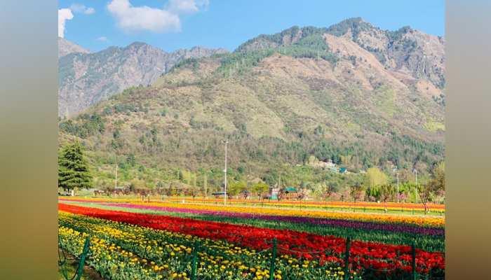 आम लोगों के लिए खुला श्रीनगर का ट्यूलिप गार्डन, PM मोदी की अपील पर बड़ी तादाद में पहुंचे लोग