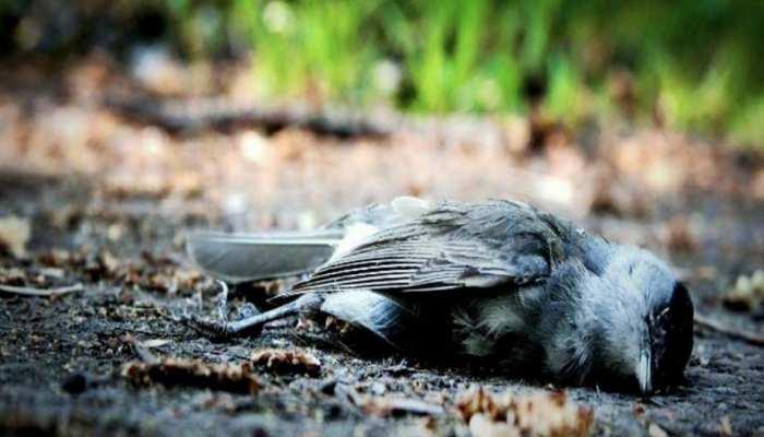 Jatinga Valley mystery: अजीबोगरीब घाटी! जहां पक्षी करते हैं सुसाइड, वैज्ञानिक भी नहीं सुलझा सके रहस्य