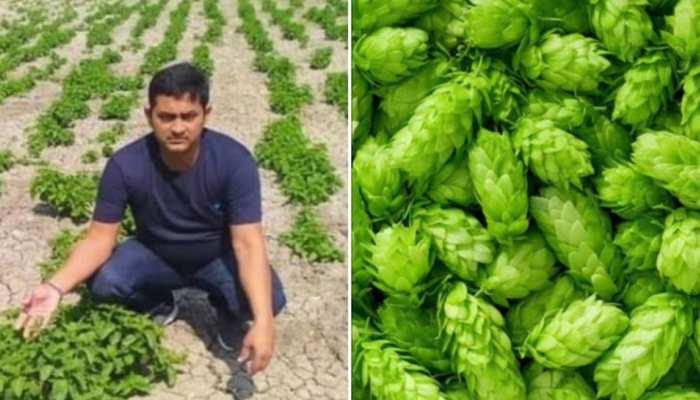 Aurangabad: 1 लाख रुपये किलो बिकने वाली Hop-Shoots सब्जी की खेती का दावा निकला झूठा, युवक हुआ अंडरग्राउंड