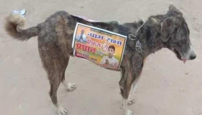 आवारा कुत्तों के पीठ पर लगाया पोस्टर, Photo हुई वायरल तो नेता का आया अजीबोगरीब जवाब