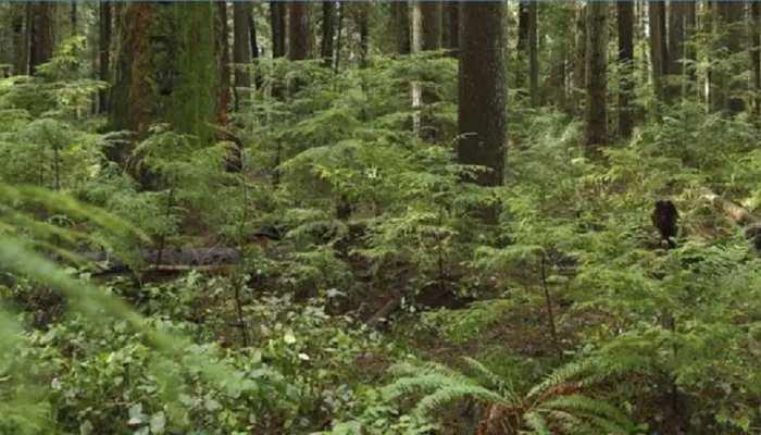 Dungarpur: जंगलों को बचाने में जुटा वन विभाग, आग से निपटने के लिए तैयार की योजना