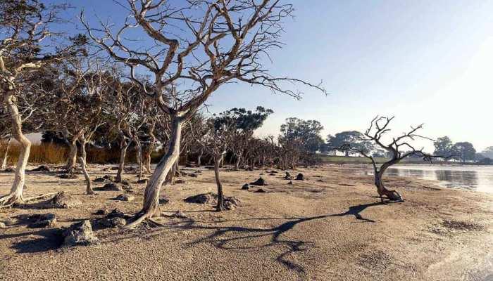 Ghost Forest: इस राज्य में तेजी से फैल रहा भुतहा जंगल, 21 हजार एकड़ जमीन पर कब्जा; वैज्ञानिक हैरान