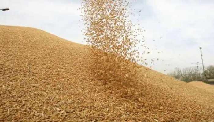 19 दिन में MSP पर 2.92 लाख 925 टन गेहूं की हुई खरीद, 27,779 किसानों को मिला लाभ