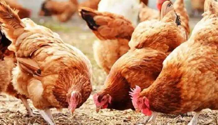 Pune: मुर्गियों ने नहीं दिए अंडे, थाने पहुंच गया Poultry Farm मालिक, दर्ज कराई शिकायत