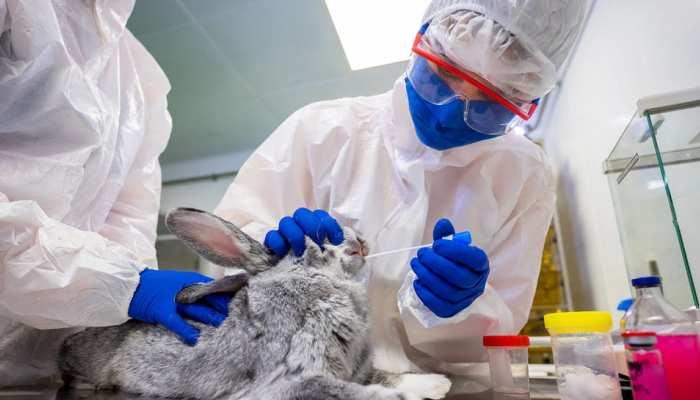 Corona: दुनिया में जानवरों के लिए पहली वैक्सीन तैयार, Russia ने बनाए 17 हजार डोज