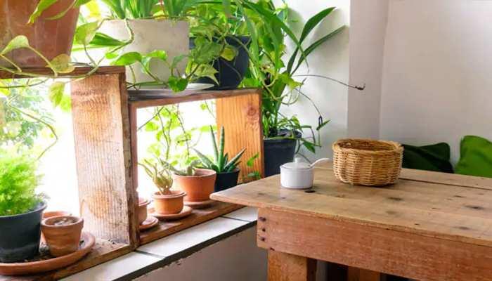 कोरोना से करना है बचाव तो घर में ही उगाएं ये औषधीय पौधे, नहीं जाना पड़ेगा अस्पताल