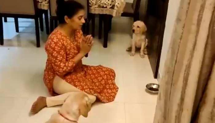 देसी महिला ने कुत्तों को सिखाया खाने से पहले प्रार्थना करना, दिल जीत लेगा Video