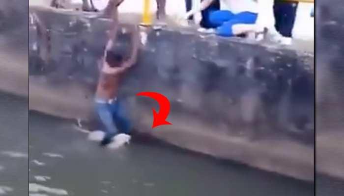 पानी में गिरे कुत्ते को बचाने के लिए लड़के ने लगाई जान की बाजी, Video हो रहा वायरल